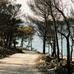 Nach einem Waldbrand, Kroatien