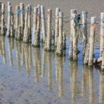 Wattenmeer, Dänemark