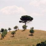 Crete Senesi, Italien