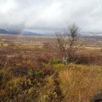 Dovrefjell, Norwegen