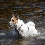 Spaß im Fluss