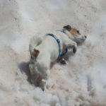 Abkühlung im Schnee