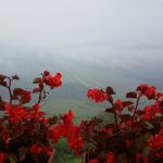 Istrien im Nebel