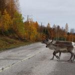Auf dem Weg zum Polarkreis (Finnland)