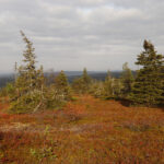 Riisitunturi Nationalpark (Finnland)