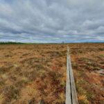 Storre Mosse (Schweden)